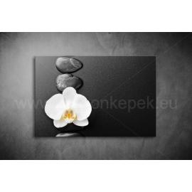 Orchidea Poszter 002