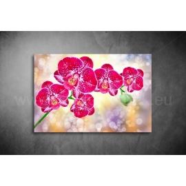 Orchidea poszter 004