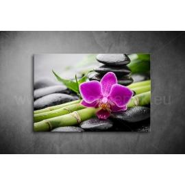 Orchidea Poszter 008