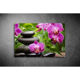 Orchidea Poszter 009