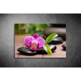 Orchidea Poszter 011