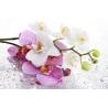 Orchidea Poszter 012