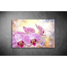 Orchidea Poszter 019