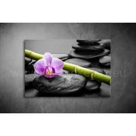 Orchidea kövekkel Poszter 023
