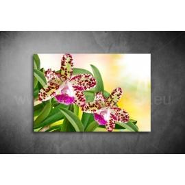 Orchidea Poszter 024