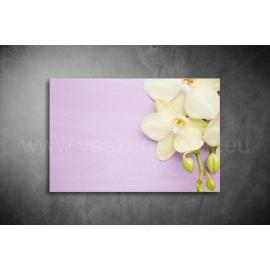 Orchidea Poszter 028