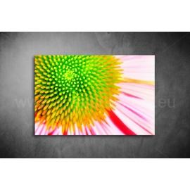 Virág Poszter 033