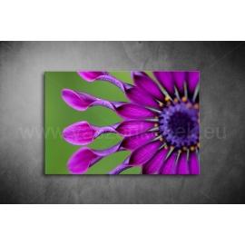 Virág Poszter 034