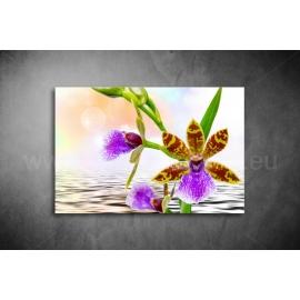 Orchidea Poszter 039