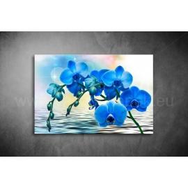 Kék Orchidea Poszter 041