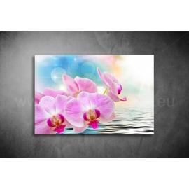 Orchidea Poszter 043