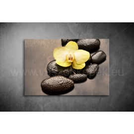 Orchidea Poszter 049