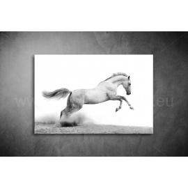 Fehér Ló Poszter 002