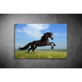Fekete Ló Poszter 003