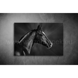 Fekete Ló Poszter 005