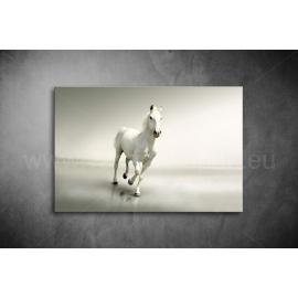 Fehér Ló Poszter 011