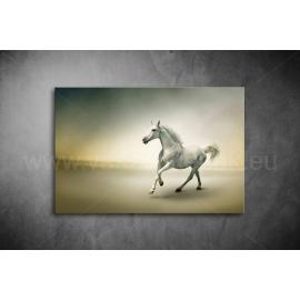 Fehér Ló Poszter 012