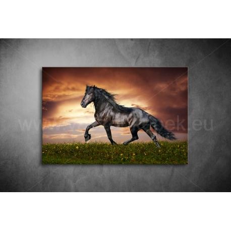 Fekete Ló Poszter 014