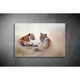 Tigrisek Poszter 034