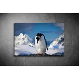 Pingvines Poszter 062