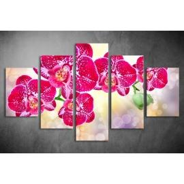 Többrészes Orchidea poszter 004 - (választható formák)