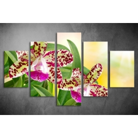 Többrészes Orchidea poszter 024 - (választható formák)