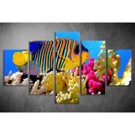 Többrészes Pillangóhal poszter 041 - (választható formák)