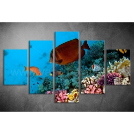Többrészes Halak, Korallok poszter 045 - (választható formák)