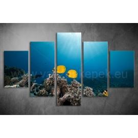 Többrészes Halak, Korallok poszter 051 - (választható formák)