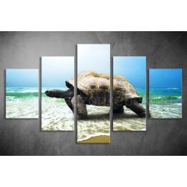 Többrészes Teknős poszter 061 - (választható formák)