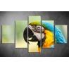 Többrészes Papagájos poszter 074 - (választható formák)
