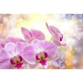 Virágok, növények